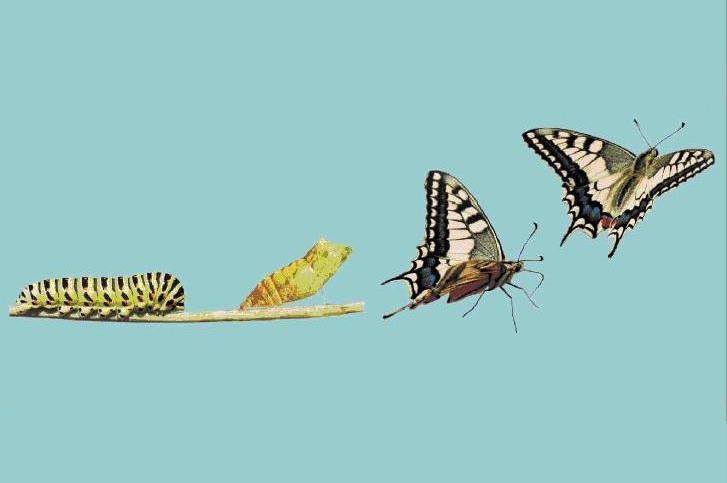 Agile_Transformation