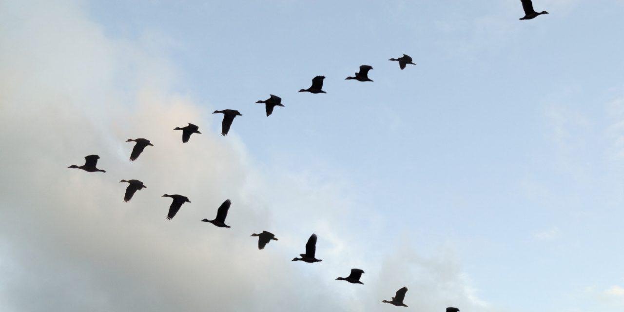 Enabling self-organization of Agile teams