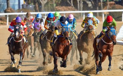 CHOW #253 – Horses for courses in the Machine Learning Race